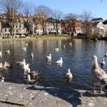 Stavanger - retour en ville11